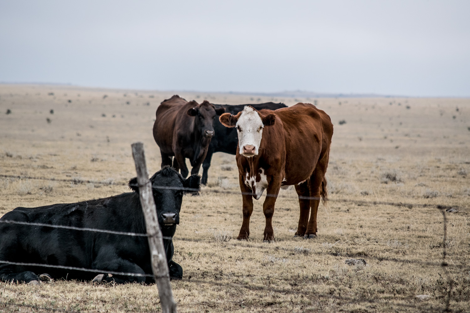 cow_nm_100315_0100